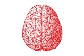 Mantén en forma tu cerebro